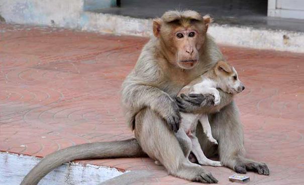 monkey1 másolata