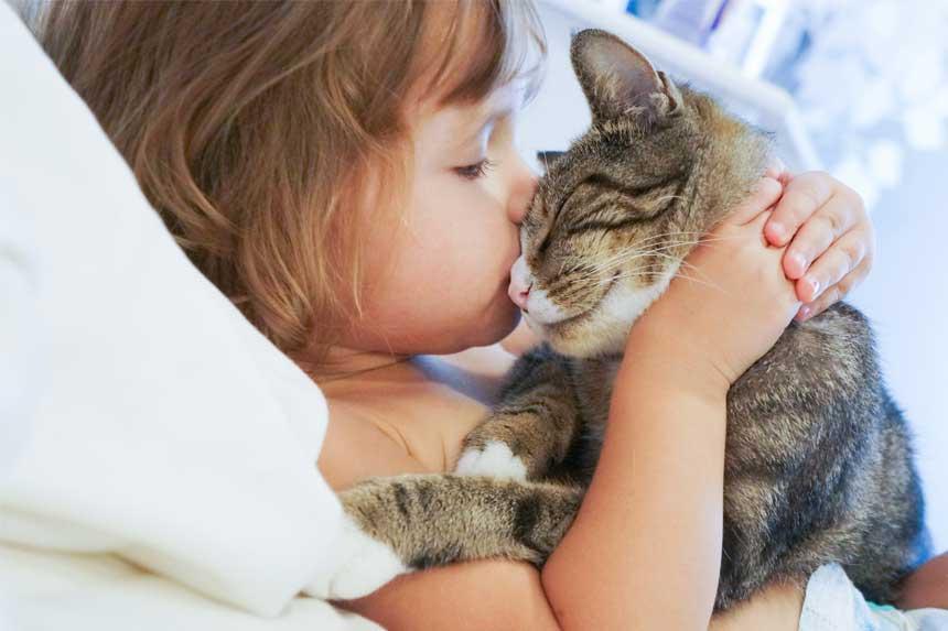 macskat-simogatok-vigyazat-eletveszelyes-korokozot-terjeszthetnek-a-macskak2