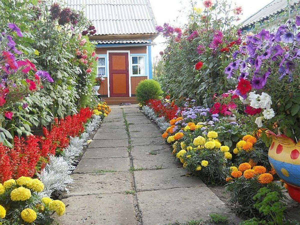Расположение цветов на клумбе фото