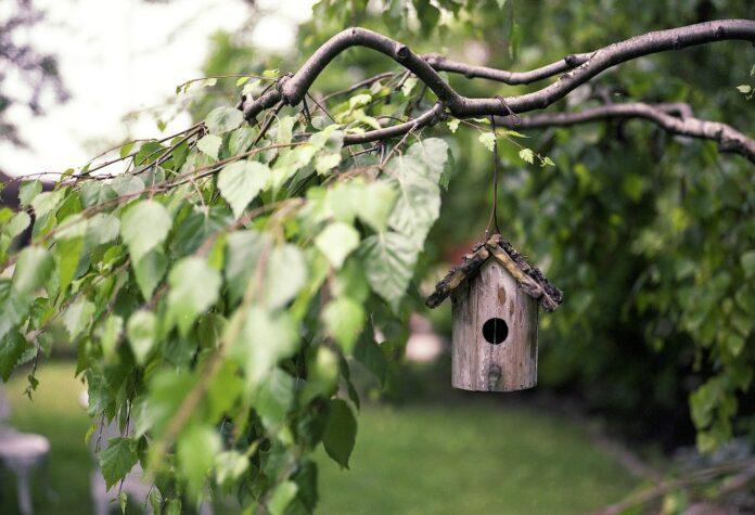 madárház